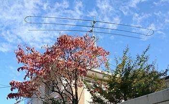 紅葉とアンテナ_scr.JPG
